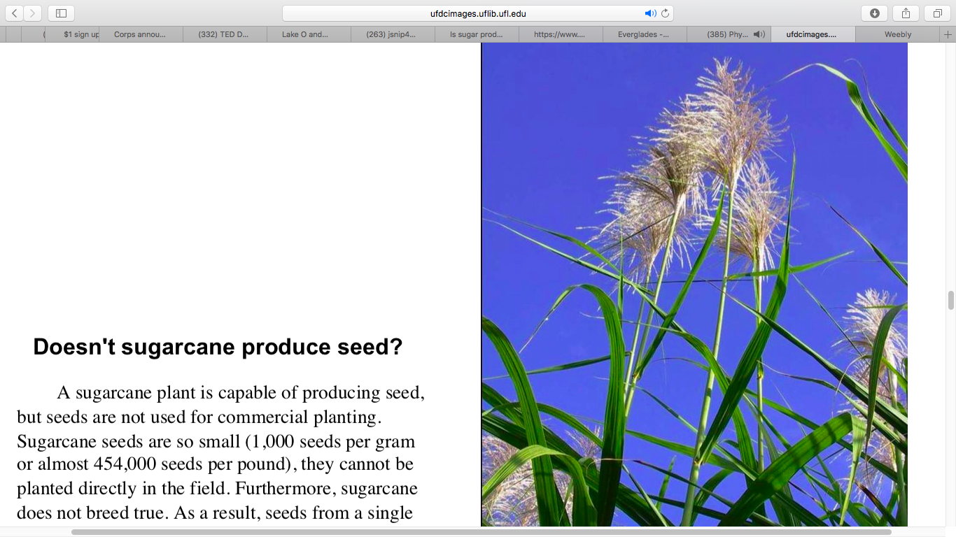 Florida Phosphate - An Overview of Florida Sugarcane